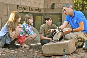 Penguin Encounter