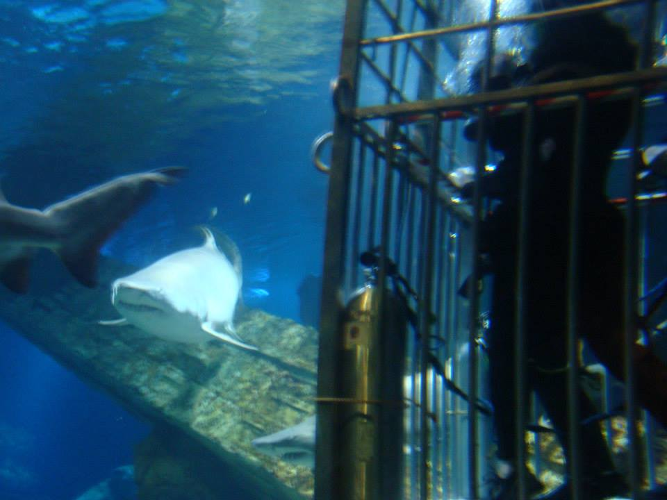 Shark_Dive_Fun
