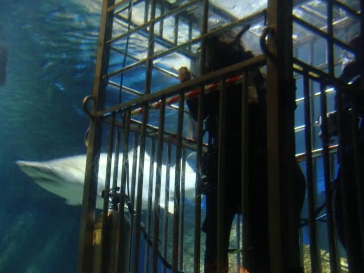 Shark_Friend