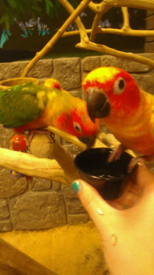 Birds May 2012