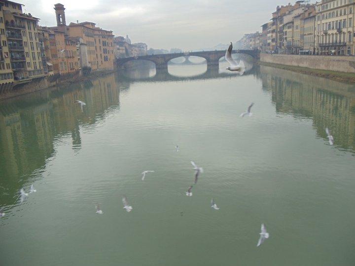 Florence_Gulls_January_2011